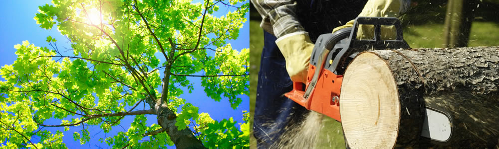 Tree Services Maple Shade